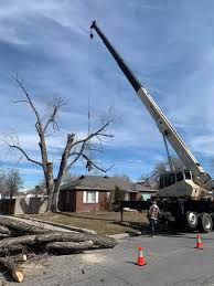 Facts About a Tree Service