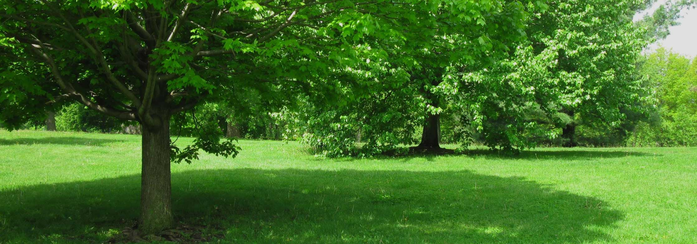 Tree care services and tips for shade trees