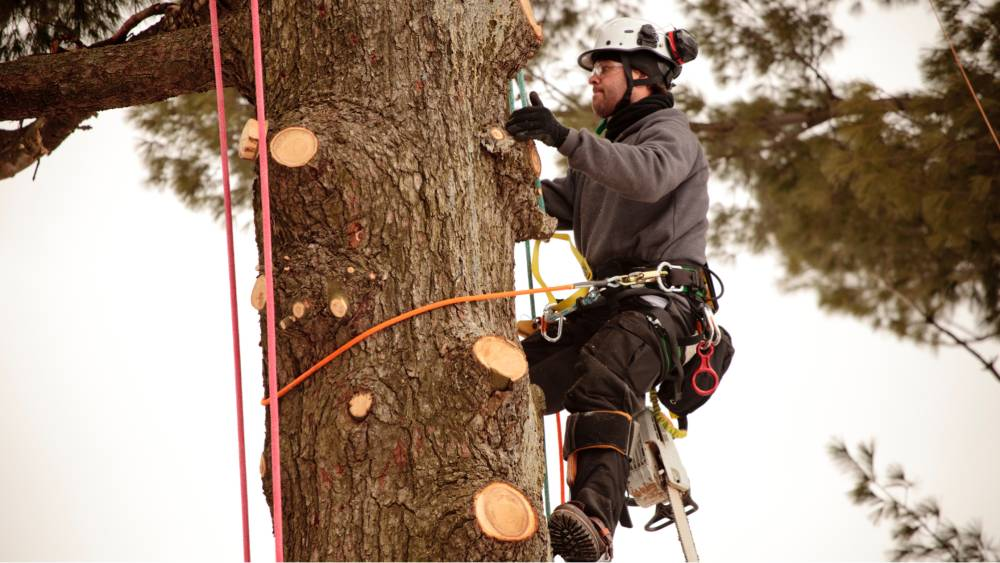 5 things to look for when choosing a tree removal service